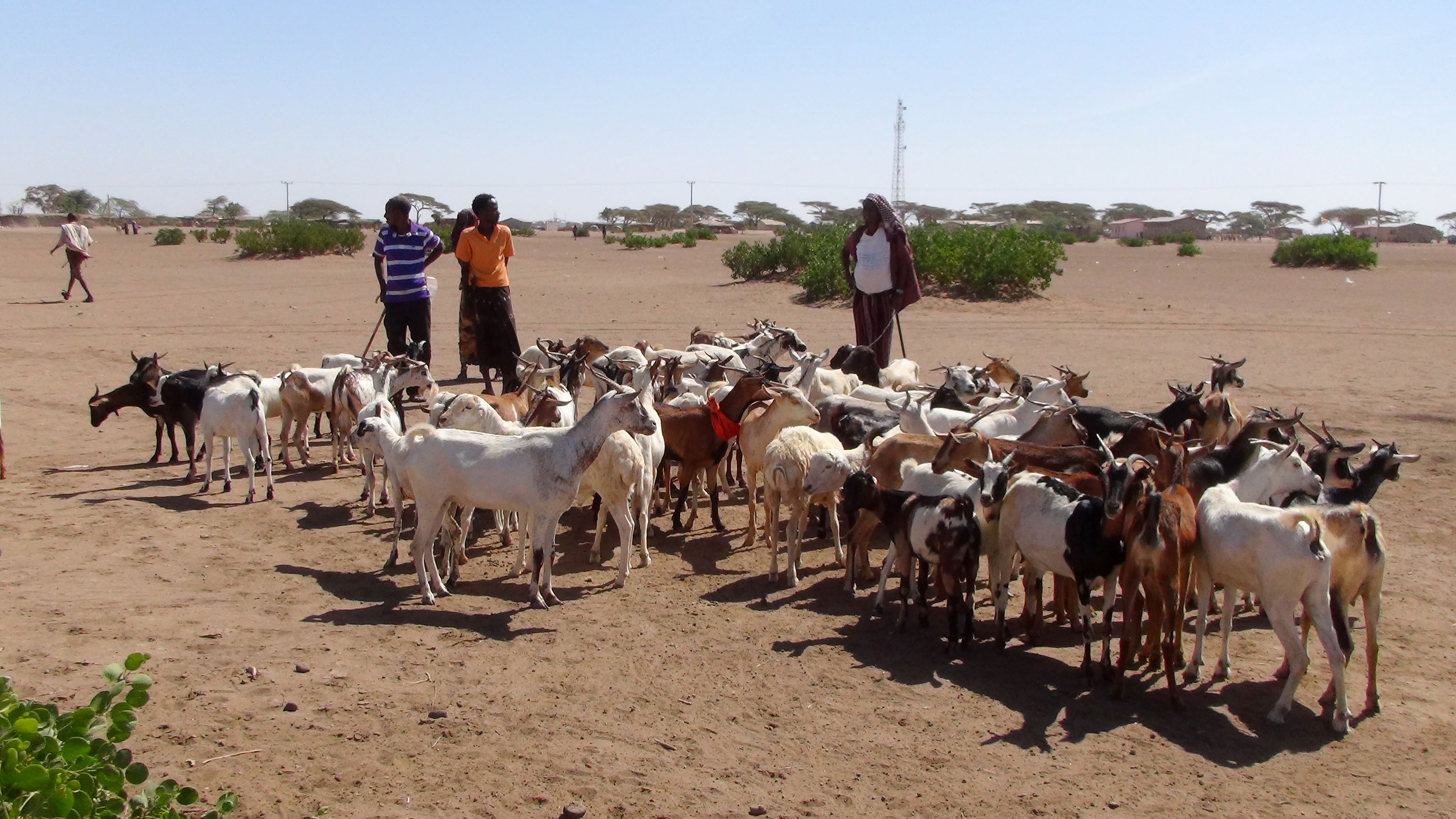 Photo: ©FAO/Tamiru Legesse