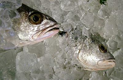 Photo: Lotus Head Photography, via Wikimedia Commons - http://commons.wikimedia.org/wiki/File:Fish_Packed_in_Ice.jpg