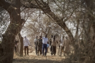 FAO offers novel assessment of trees and forests in the world's drylands