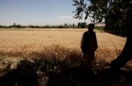 FAO - Nouvelles: Afghanistan – La FAO appelle à lever d ...