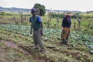 FAO's goal: Healthy food for all, based on sustainable agricultural development