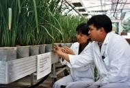 FAO - Nouvelles: La FAO et l'AIEA célèbrent des succès ...