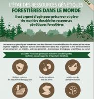 L'Etat des ressources génétiques forestières mondiales