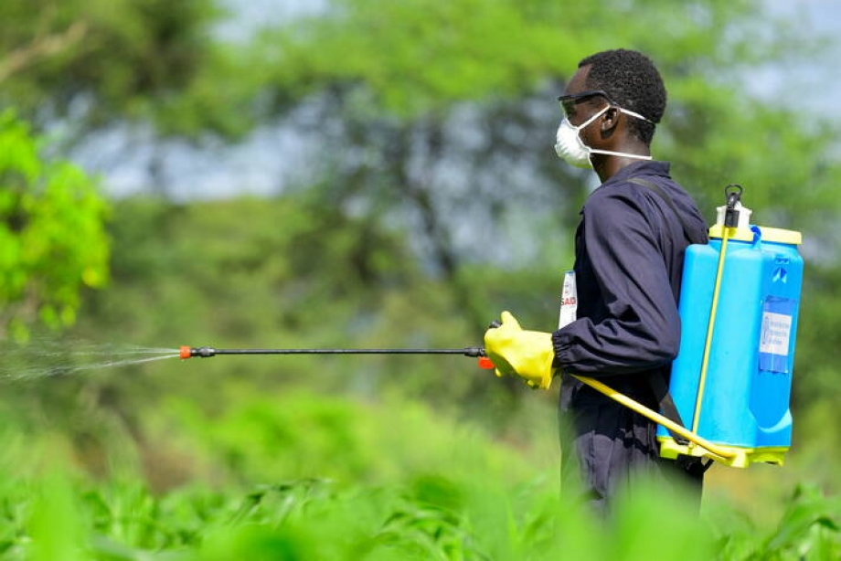 Pest and Pesticide Management | Food and Agriculture Organization of the  United Nations | Food and Agriculture Organization of the United Nations
