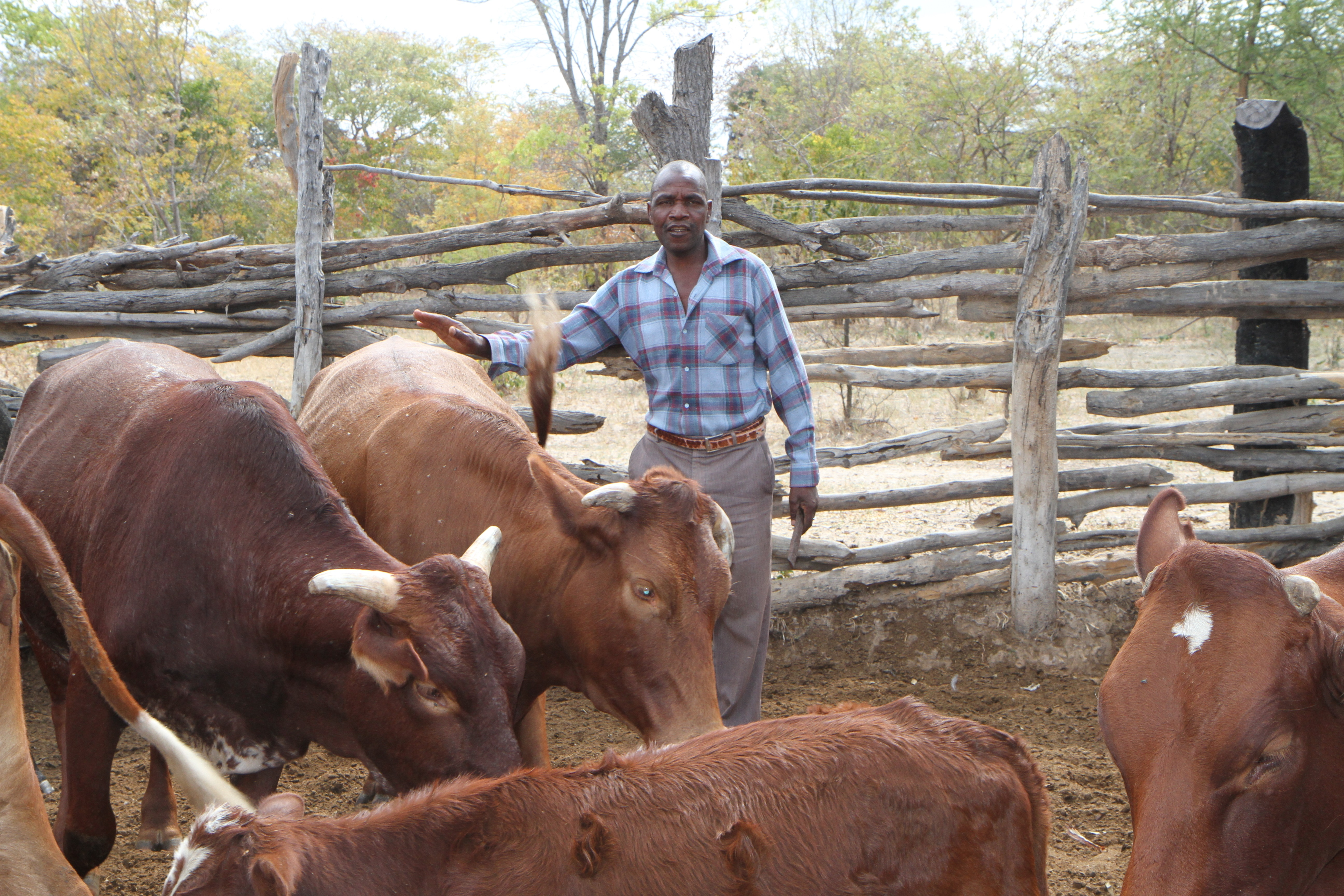 the serious problem of livestock diseases and its impact on african food security Southern african development community  sadc member states seek to improve the lives of their people by removing the serious obstacle of inadequate access to food,  (fanr) of sadc is responsible for programmes in food security, crop and livestock production and fisheries.