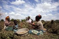 Año Internacional de la Agricultura Familiar: AMARC y la FAO unen sus fuerzas