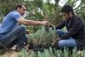 La FAO préconise un objectif Zéro déforestation illégale
