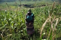 Nouveau programme de l'UE visant à améliorer la gouvernance foncière dans dix pays africains
