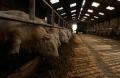 Harmonisation des mesures de l'impact environnemental de l'élevage