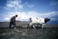 Nuevo fondo fiduciario para la agricultura y la seguridad alimentaria