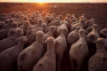 Gran potencial para reducir las emisiones de gases de efecto invernadero de la ganadería