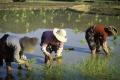تعاون بين الصين ومنظمة الأغذية والزراعة للحفاظ على مواقع التراث الزراعي ذات الأهمية العالمية
