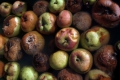 Joint action needed to tackle massive global food losses