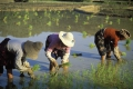China and FAO working together to preserve globally important agricultural heritage sites