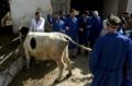 Les services vétérinaires du Tadjikistan se privatisent et luttent contre la brucellose