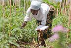 الإيكولوجيا الزراعية