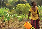 Producción sostenible de cultivos