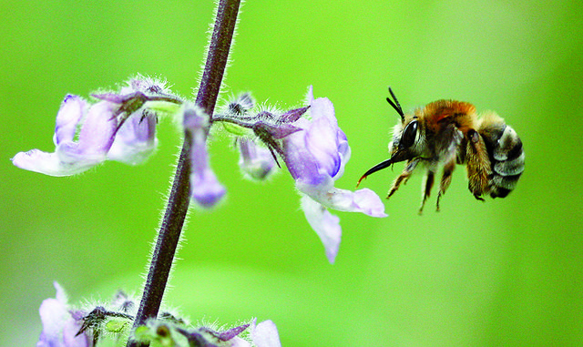 Global Action on Pollination Services