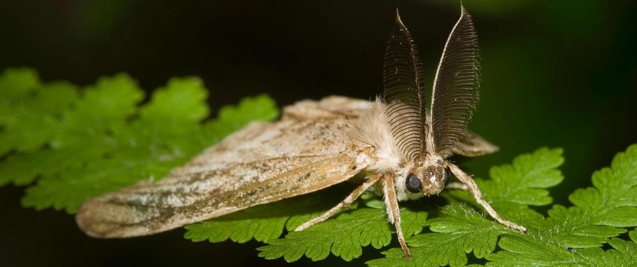 Pest and Pesticide Management