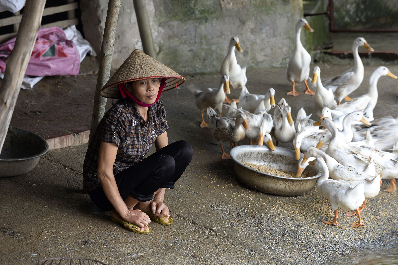 ©FAO/Hoang Dinh Nam
