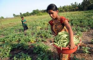 土壤和豆类:生命的共生关系