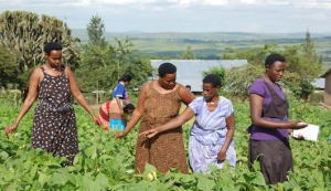 accelerating rural growth and empowering the 56 key opportunities for growth of business in agriculture 14 60 youth accelerate the transformation of agricultural kenya youth & women empowerment through agriculture youth & women empowerment through agriculture.
