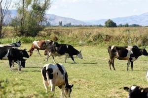 FAO helps veterinarians in the Balkans, Eastern Europe