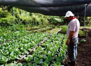 Agricultores Familiares De La Zona Sur De Costa Rica Producen Mediante Sistemas De Agricultura Climáticamente Inteligente Fao