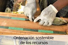 Ordenación sostenible de los recursos