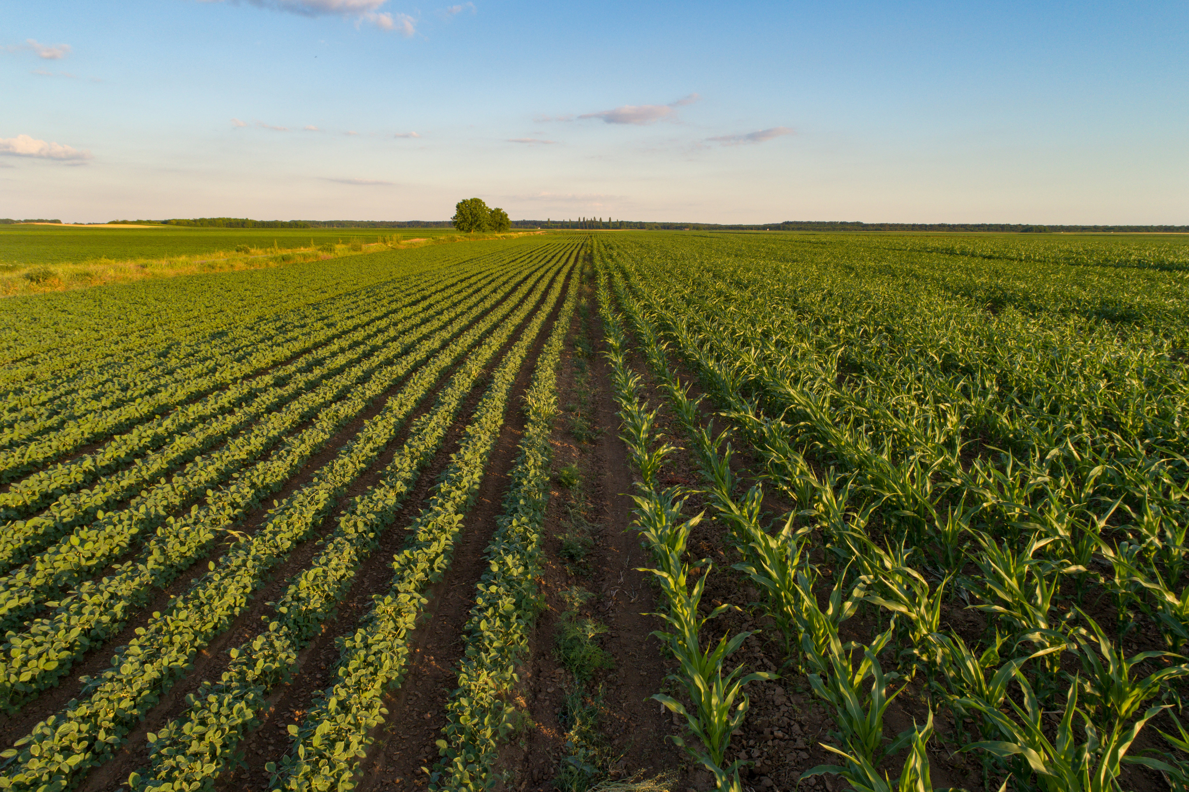 FAO and OECD call for responsible investment in agriculture