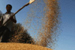 Support to Russian agriculture in the context of WTO membership