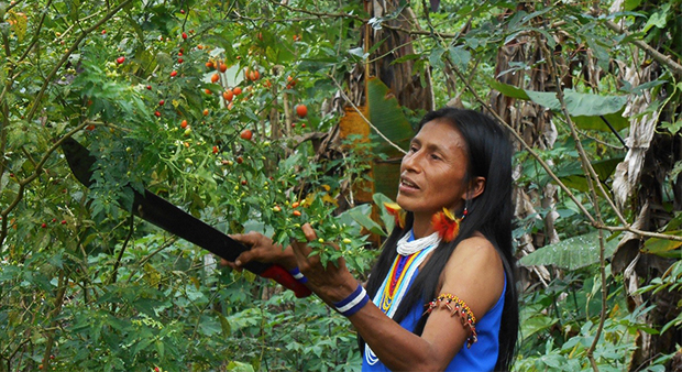 an overview of the life of the indigenous people in the amazon Measles threatens indigenous people in amazon  where civil unrest and an unstable economy are affecting all aspects of life domestic immunization activities have .