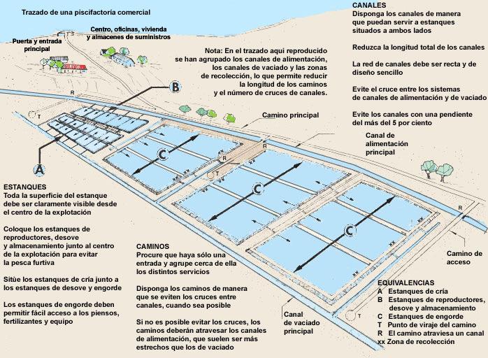 1 informaci n b sica for Construccion de estanques acuicolas