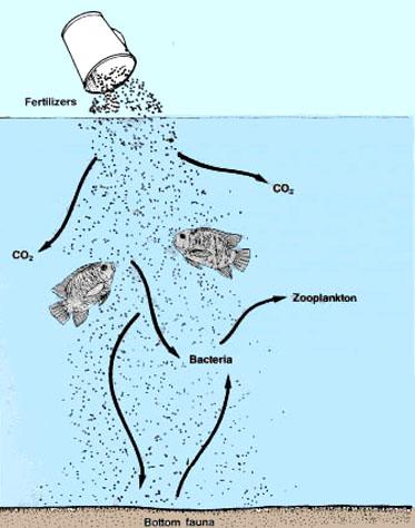 6  Fertilizing Fish Ponds
