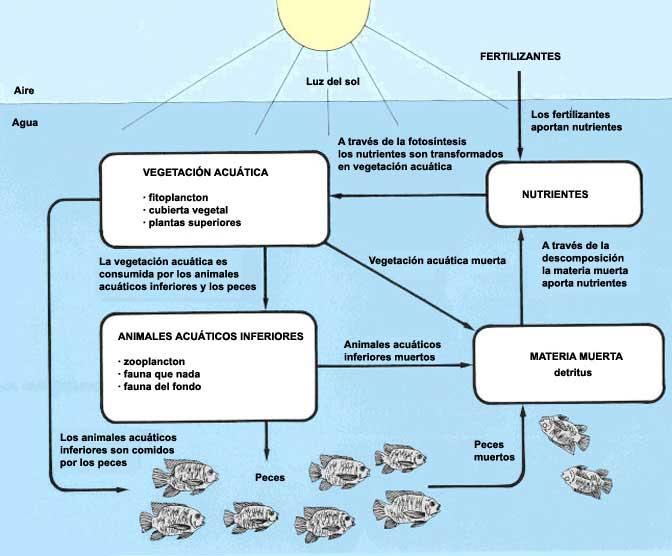 6 fertilizaci n de los estanques pisc colas