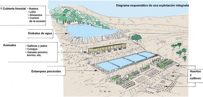 1 informaci n b sica for Elaboracion de estanques para piscicultura