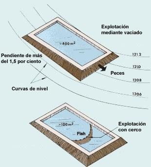 1 informaci n b sica for Cria de mojarra en estanques
