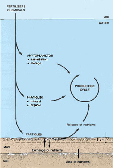 6 fertilizing fish ponds for Fish pond fertilization