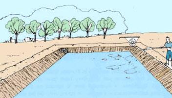 5 tratamiento de los estanques por encalado for Fertilizacion de estanques piscicolas