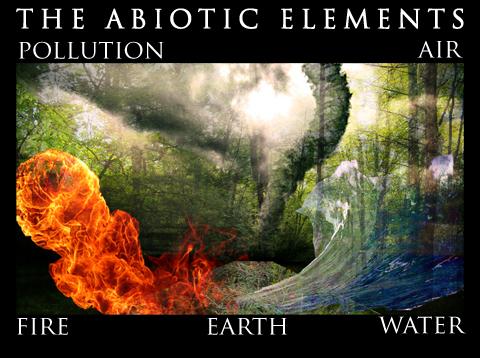 abiotic disturbances