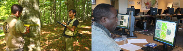Forest monitoring and assessment