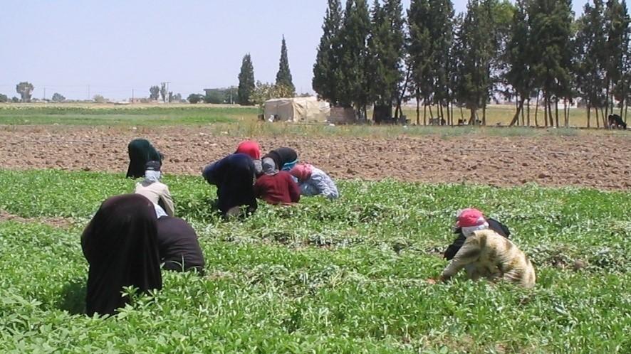 FidaaF. Haddad/Egypt/FAO