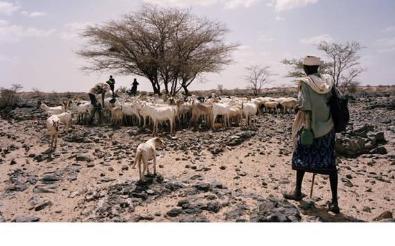 Afrikas horn torka