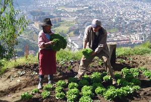 Rosario, otra reina de la agricultura urbana