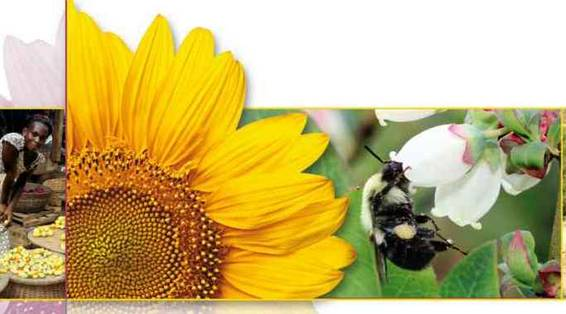 Policy Mainstreaming of Biodiversity and Ecosystem Services With a Focus on Pollination
