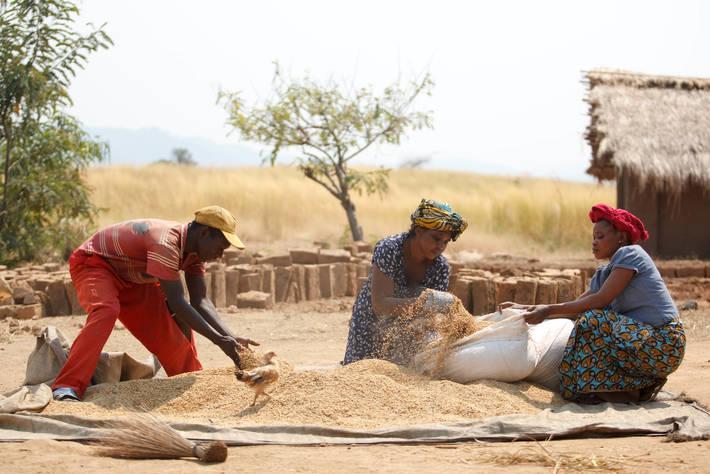 e5cb8b5c9a Le prime previsioni della FAO per l'anno prossimo: la produzione  cerealicola attenua i massimi storici raggiunti