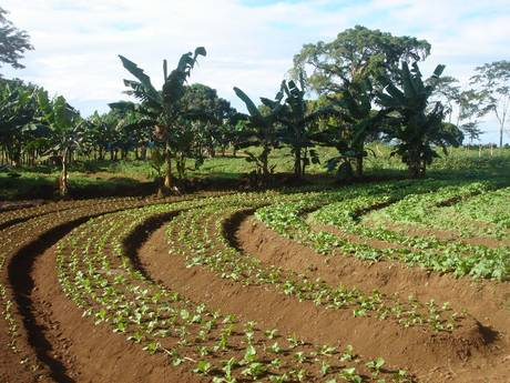 Organic Agriculture: Organic Agriculture Home