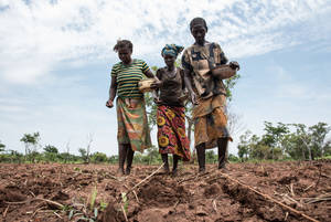 Photo: ©FAO-WFP/Ricci Shryock / FAO