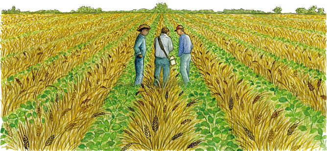intercropping in traditional farming systems pdf