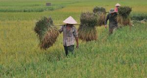 Photo: ©FAO/Hoang Dinh Nam